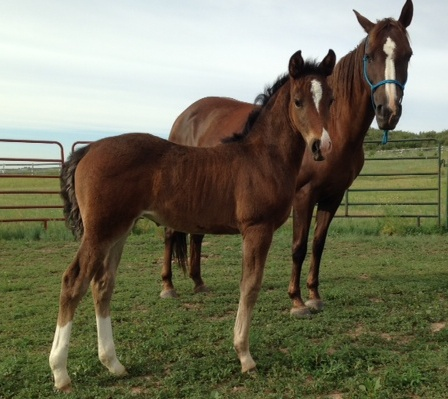 JS Silver Joy, 2014 filly by Triple S Silver Smoke and Eldar's Really Elegant